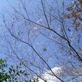 20061104四季桜