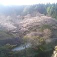 20061105四季桜