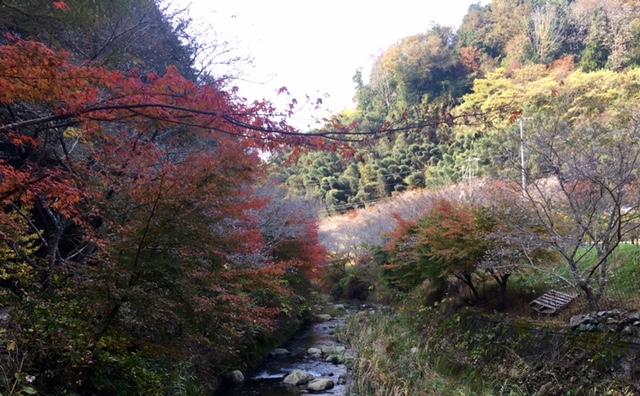 川見四季桜の里20161117