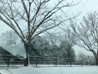 美濃加茂も雪